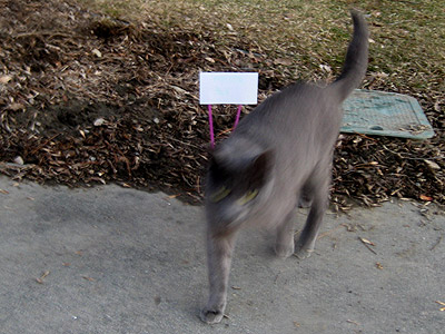My own em, brown carpet welcome. Nimbus was happy to see me, and Mary made a welcome back sign for me out of an index card and two pink straws.