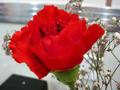 Red Carnation at the burger joint where we ate