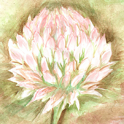 Watercolor study: I decided to paint a clover