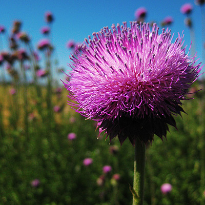 This reminded me of the days when crayola made a thistle colored crayon, too.