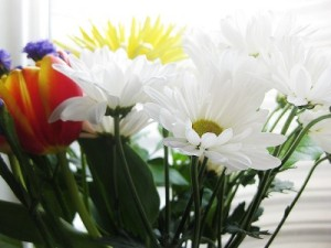 Daisies, tulips, and more, courtesy of Aperture Science
