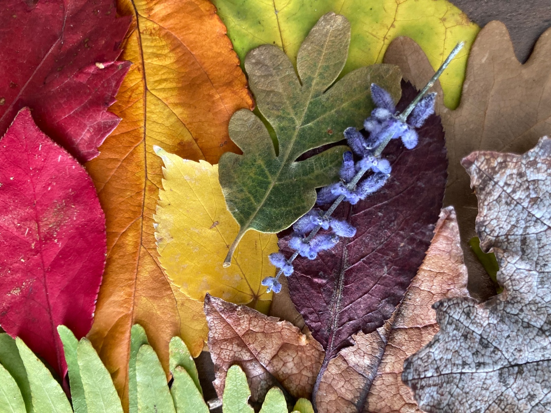 Fall leaves and a sprig of lavender arranged in a spectrum